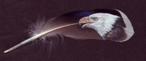 Feather painting - bald eagle by Chrysaetos