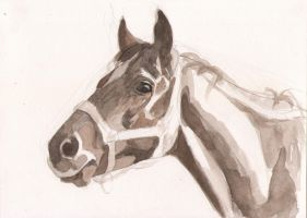 thoroughbred by Albagf