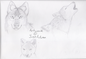 Wolves Realism by JustAutumn