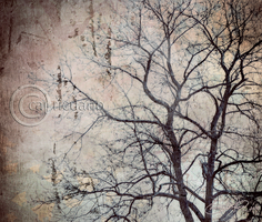 Branches by Capricuario