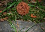 Gumball on Moss by WidoPhoto