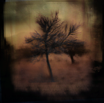 Where She Went by intao