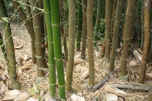 Bamboo XIII by KW-stock