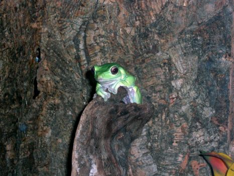 Happy Tree Frog by slave-girl