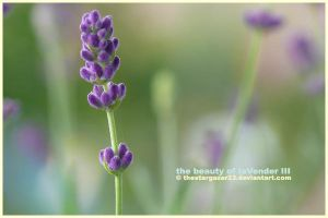 the beauty oF laVender III by thestargazer23