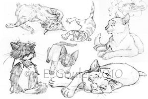 CatS by LittleMilie