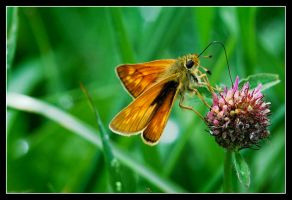 Drink the nectar of life by MessiahKhan