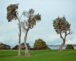 Trees at Musik Point by kulesh