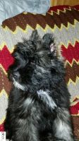 Blaze at 14 Weeks by The-Dude-L-Bug