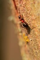 Ant climbing by MrBlueSky1987