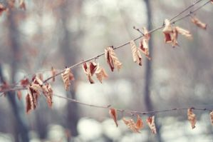 Stillness by solefield