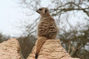 Sentry Duty at Whipsnade by tammyins