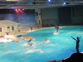 Dolphin Show 2 by hejsanhoppsanify