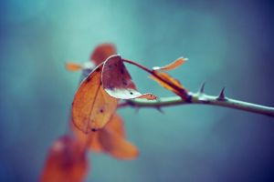 1343 - Leaves by boxx2genetica