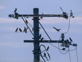 birds at the morning meeting by larksgar