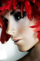 Red Feathers by Tom-Mosack