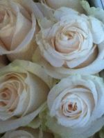 Norma's white flowers by MikariStar