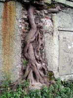 The roots of life by la-arveja-gotica