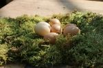 Easter Stock 15 by Malleni-Stock