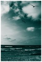 Seagull by ankl