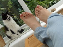 Cat Likes My Feet by Foxy-Feet