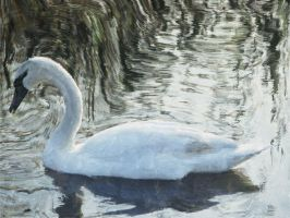 Swan Watercolor by skcin7