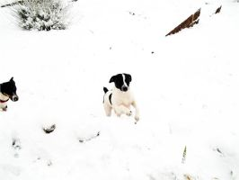 Pups In Snow by Before-I-Sleep