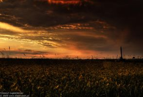 In the land of chaos by Dhante