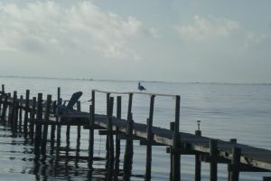 Seagull on pier by cbowman57