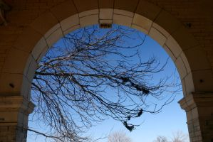 Arch and bare tree by nwalter
