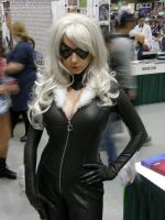 Eccc 2013 Black Cat by nwpark