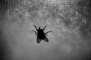 fly on the wall by neurophonix