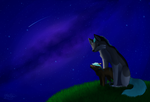 52. A night under the stars by InuKii
