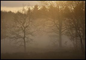 Misty afternoon on the heath by jchanders