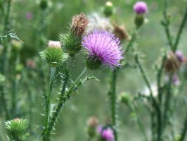 Leaning Tower of Thistle by WalnutHill