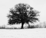 Tree in the Snow by falloutboy9993