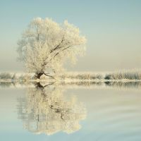 Winter tree covered with frost by KristaThibodeau