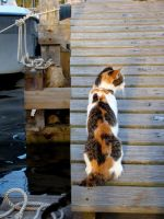 The Saltwater Cat by Astridyl