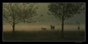 In the foggy Morning....,,,,,, by YuriBonder