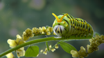 Catepillar in flowers by the-epic-k
