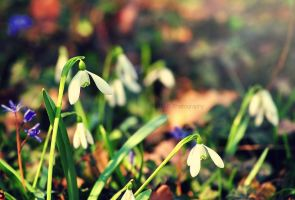Spring by Snowflake20