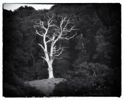 Spirit Tree by Bazz-photography