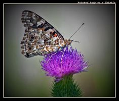 Painted Lady Profile by boron