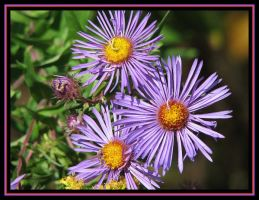 Wild Flowers by picworth1000wrds