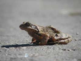 froggy by solopv