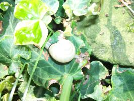 Snail safely in the garden by Mecarion