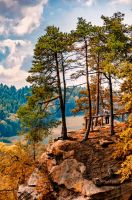 pines hill by marrciano