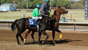 Racehorse Stock 25 by Rejects-Stock