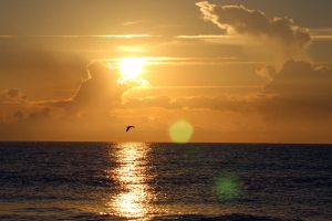 Seagull Flying at Sunrise on Hilton Head Island by winterface