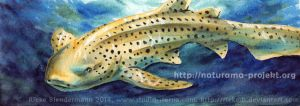 Zebra shark, Naturama Project 2014 by rieke-b